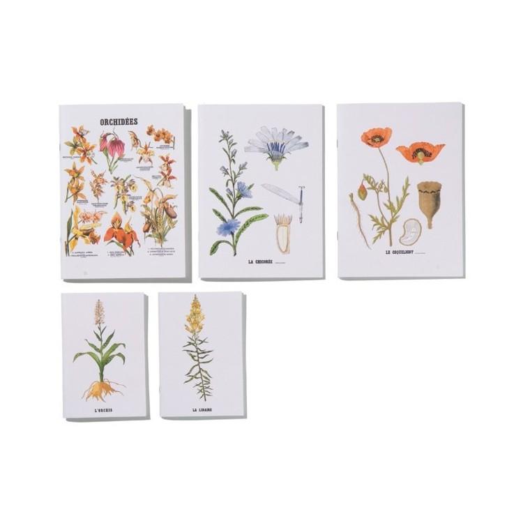 Carnets Planches Botaniques