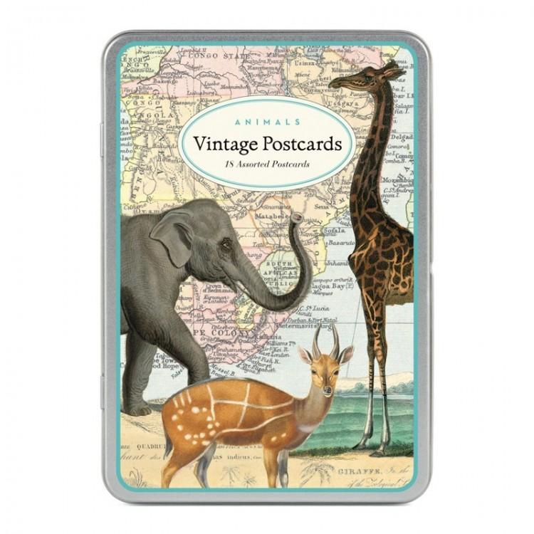 Cartes Postales Animaux Cavallini