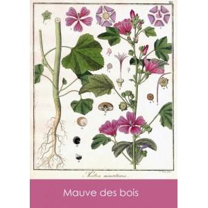 Sachets de graines Sandra Lefrançois - 5 variétés