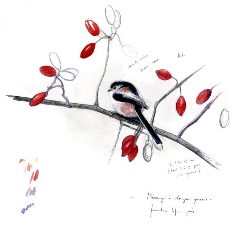 Coffret de correspondance Oiseaux du jardin - Sandra Lefrançois
