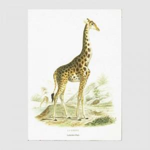 Cahier La Girafe