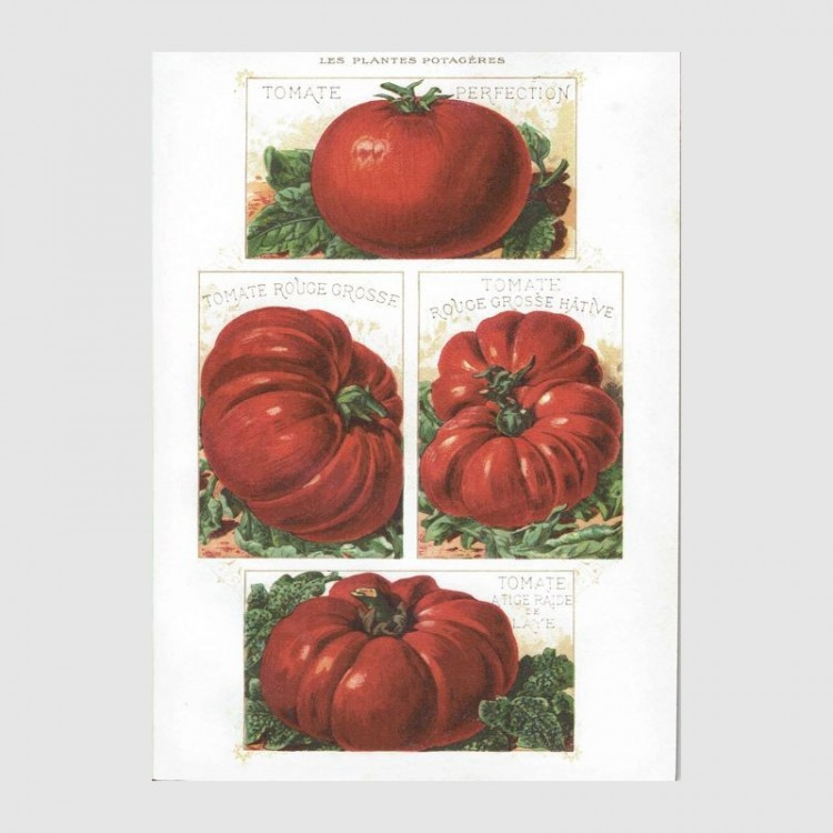 Cahier Tomates