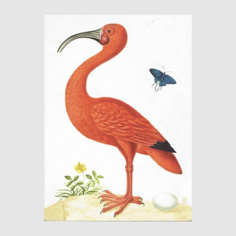Cahier Ibis Orange