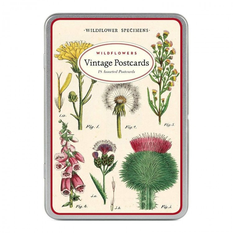 Cartes Postales Vintages Wildflower Specimens