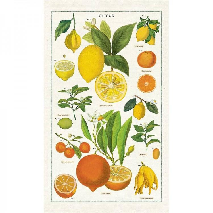 Torchon de Cuisine Citrus