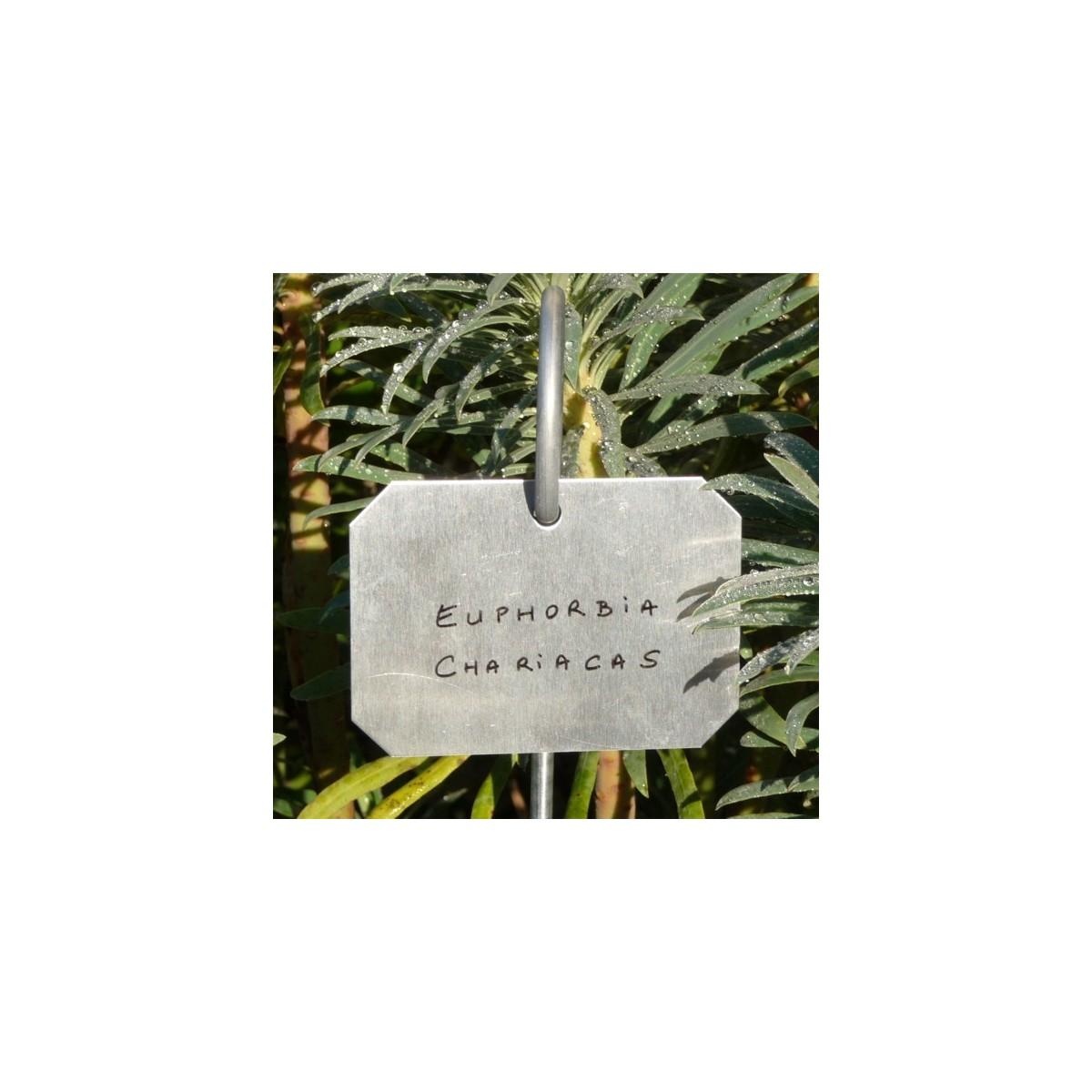 Etiquette zinc 39 poppy 39 botanique editions - Etiquette jardin ...
