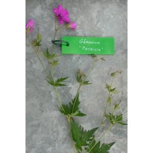 10 Etiquettes Plexiglass Vert 9.5 x 3 cm