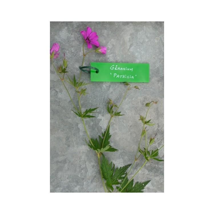 Etiquettes Plexiglass Vert