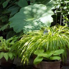plantes-pots-boulogne