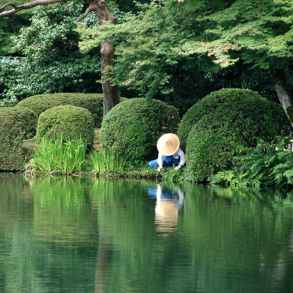 Carnet de voyage jardins du japon botanique edition for Plan jardin japonais