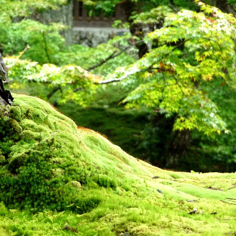 Carnet de voyage jardins du japon - Jardin japonais mousse ...