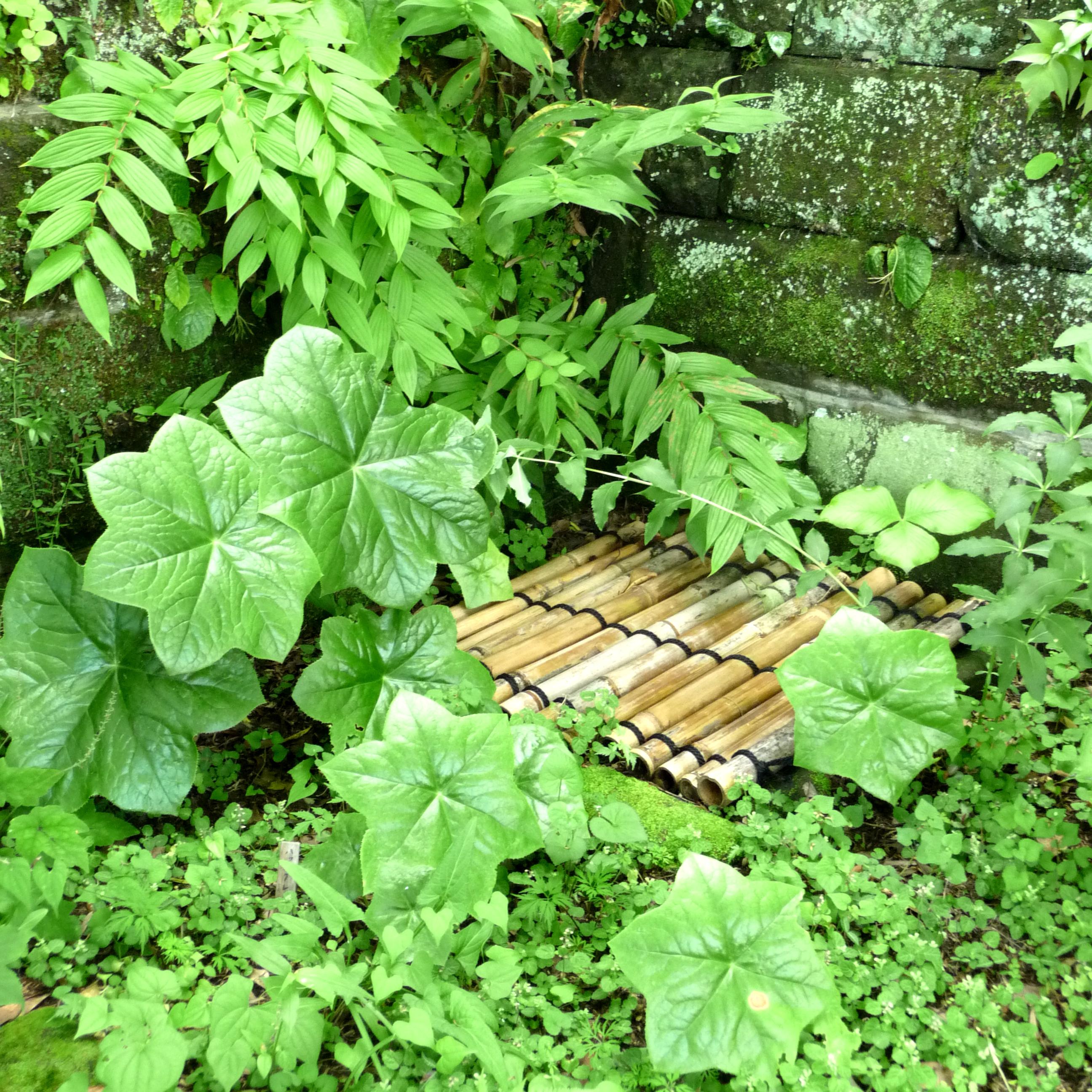 Structure en bambou dans un jardin japonais